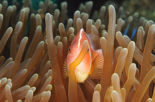 rybka mezi korály